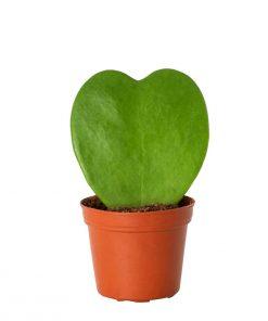 هويا قلب الحب